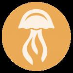 Eco_Evo_JellyFish_Icon