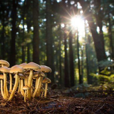 mushroom-2087997_1920